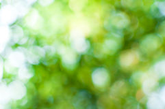 Абстрактное bokeh зеленого цвета природы от предпосылки дерева Стоковая Фотография