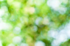 Абстрактное bokeh зеленого цвета природы от предпосылки дерева Стоковые Фото