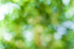 Абстрактное bokeh зеленого цвета природы от предпосылки дерева Стоковая Фотография RF