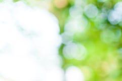 Абстрактное bokeh зеленого цвета природы от предпосылки дерева Стоковое Изображение