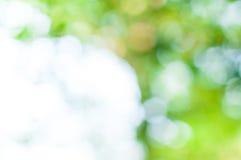 Абстрактное bokeh зеленого цвета природы от предпосылки дерева Стоковое Изображение RF