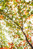 Абстрактное Bokeh предпосылки цвета дерева Стоковые Фотографии RF