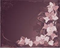 абстрактное bougenvilia предпосылки Стоковые Изображения RF