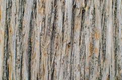 Абстрактное Surfact дерева кожи Брайна Стоковое Изображение RF