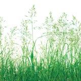 абстрактной лужок предпосылки изолированный травой Стоковое Изображение