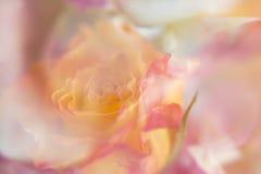 Абстрактные апельсин и красная роза Стоковые Изображения RF
