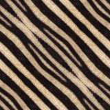 Абстрактные безшовные предпосылка или текстура нашивок зебры Стоковая Фотография
