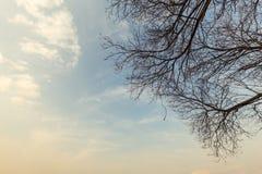 Абстрактные большие деревья и небо захода солнца Стоковая Фотография RF