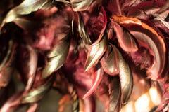 Абстрактные бургундские и оранжевые пер Стоковое Фото