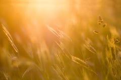 Абстрактные весна травы или backgound лета Стоковые Фотографии RF