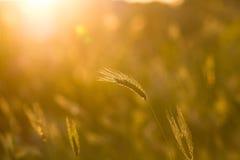Абстрактные весна травы или backgound лета Стоковые Изображения RF