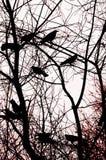 абстрактные вороны предпосылки Стоковые Фото