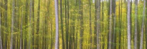 Абстрактные деревья в высокой горе стоковое изображение