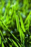 Абстрактные лезвия травы стоковое фото rf