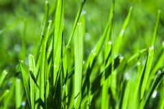 Абстрактные лезвия травы стоковое изображение
