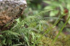 Абстрактные зеленые растения стоковое изображение rf