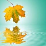 абстрактные золотистые листья Стоковое Фото