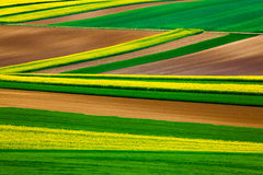 Абстрактные линии в полях Стоковое фото RF