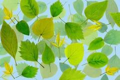 абстрактные листья зеленого цвета предпосылки Стоковая Фотография RF
