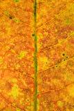 абстрактные листья конца предпосылки вверх абстрактная предпосылка Стоковые Изображения RF