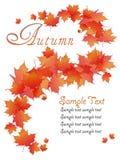 Абстрактные листья осени Стоковые Изображения