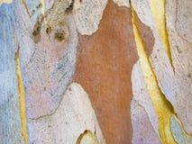 Абстрактные картины на коре дерева Стоковая Фотография RF