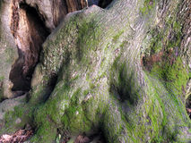 абстрактные корни Стоковое фото RF