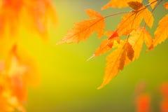Абстрактные красочные листья осени стоковое фото
