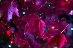 Абстрактные листья красного клена Стоковые Изображения