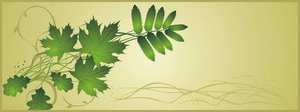 абстрактные листья состава знамени Стоковые Изображения RF