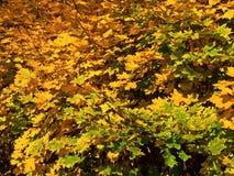 абстрактные листья цвета Стоковые Фотографии RF