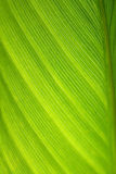 абстрактные листья Стоковое фото RF
