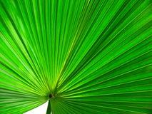 абстрактные листья Стоковые Изображения