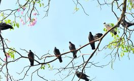 абстрактные осенние птицы предпосылки разветвляют валы вала фото парка monochrome природы dove старые Стоковое Изображение RF