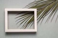 Абстрактные предпосылка бумаги минимализма и ветвь зеленого растения Стоковое Фото