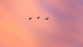 Абстрактные птицы силуэта летая на красивое небо захода солнца Стоковая Фотография RF
