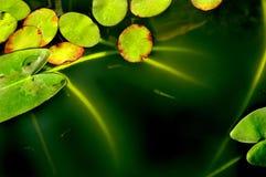 абстрактные пусковые площадки лилии Стоковые Фото