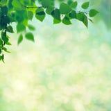 Абстрактные сезонные предпосылки Стоковая Фотография