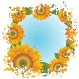 абстрактные солнцецветы grunge предпосылки Стоковые Изображения RF