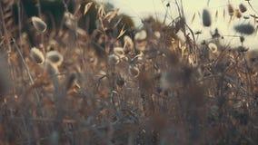 Абстрактные съемки травы с малой глубиной поля сток-видео