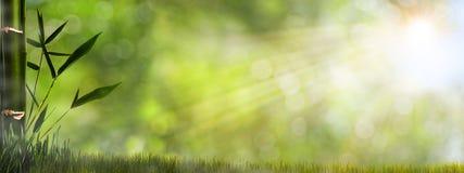 Абстрактные туманные естественные предпосылки иллюстрация штока