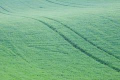 Абстрактные холмы и поля зеленой травы Стоковое Изображение RF