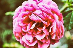 абстрактные цветки предпосылки Конец-вверх теплый битник стоковая фотография rf