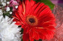 абстрактные цветки предпосылки Стоковая Фотография