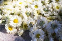 абстрактные цветки цвета хризантемы предпосылки Стоковые Изображения RF