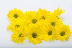 абстрактные цветки цвета хризантемы предпосылки Стоковая Фотография