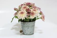абстрактные цветки цвета хризантемы предпосылки Стоковые Фотографии RF