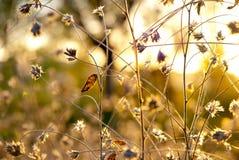Абстрактные цветки thistle стоковое изображение