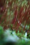 Абстрактные цветы осени Стоковое Фото