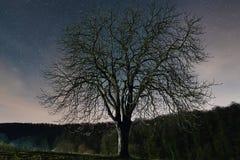 абстрактный ландшафт Дерево против неба звездной ночи Стоковое Изображение RF